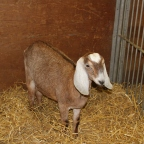 A Day at the Royal Agricultural Winter Fair (Part 1 of 2)